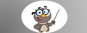 owl on grey background